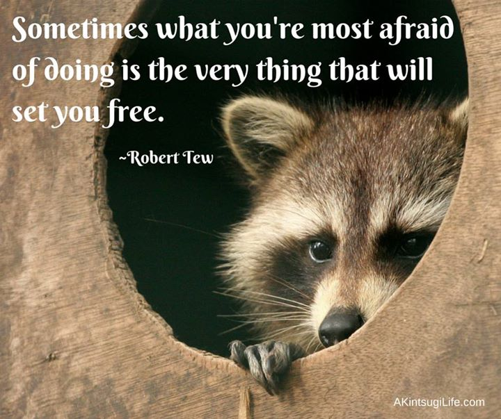raccoon peeking out of hole