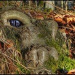 tree roots that look like a monster peering out of the earth