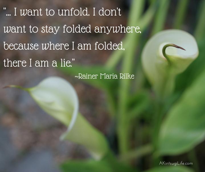 calla lilies unfurling